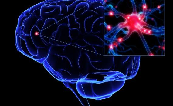 мозък3