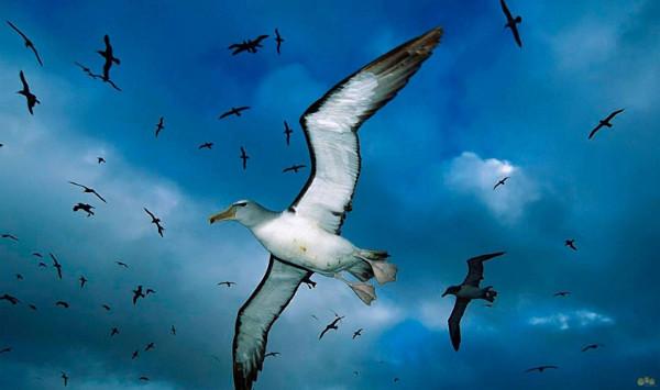 птици2