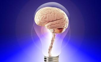 brain-20424_640