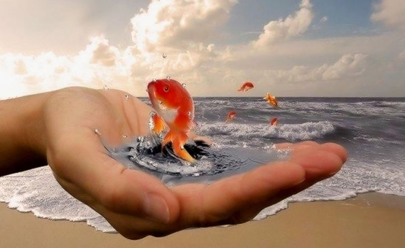 желание златна рибка